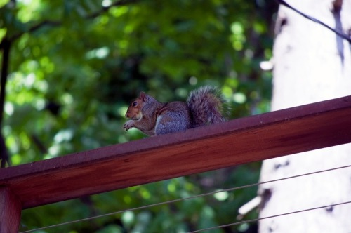 40_squirrel_in_front_of_the_an
